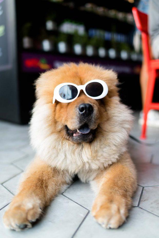 mascotas-fuera-de-casa-para-mostrar-la-vivienda-en-home-staging-marbella